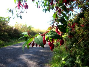 39-Fuchsia